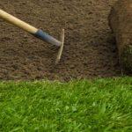 Choosing the Right Grass